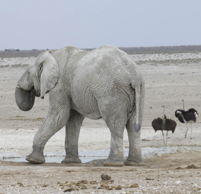 7b363f84c Afrika - Bistand/Safari - Elverum folkehøgskule