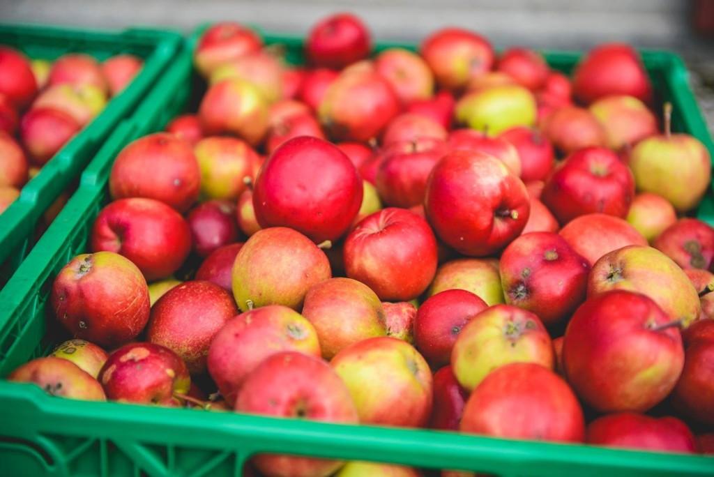 Folkehøgskolen har egne selvbegingsdager, hvor bærplukking, eplesanking og lysstøping sto på timeplanen.
