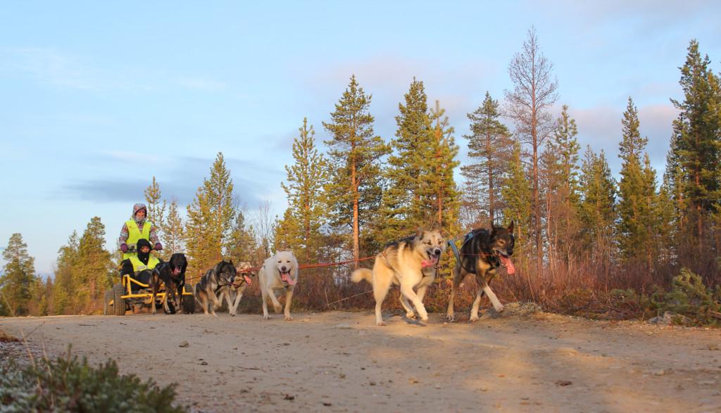 naturen i Finnmark innbyr til mye spennende friluftsliv. Hundekjøring er en populær aktivitet både høst og vinter. Foto: Marianne Moen