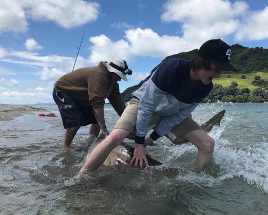 To menn fanger en hai i New Zealand