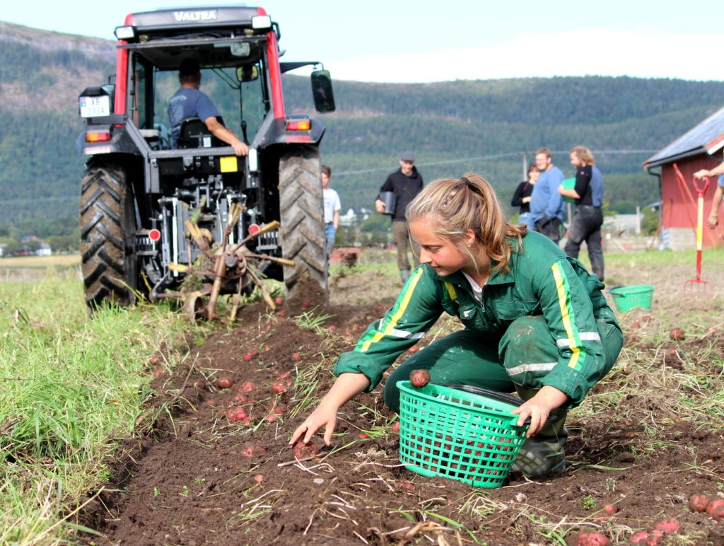 Fosen folkehøgskole, potethøst, sjølberging, økologisk landbruk, matprisen 2018, Debioprisen