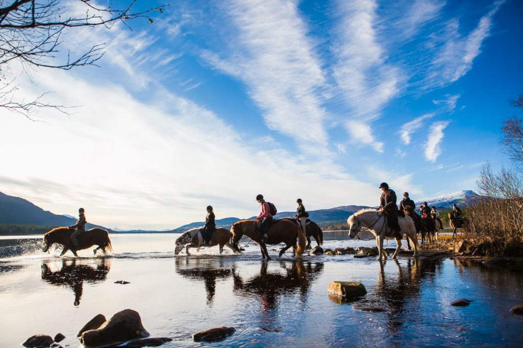 folkehøgskole hest