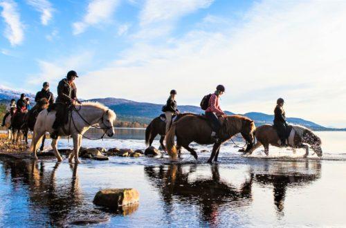 Hest på folkehøgskole
