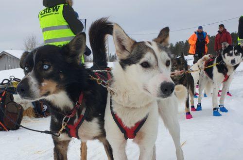 Bli med på innsiden av Finnmarksløpet!