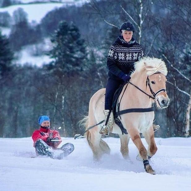 Du kan finne mange linjer med hester, hunder og generelt om dyreomsorg på norske folkehøgskoler. Bilde: Torshus folkehøgskole