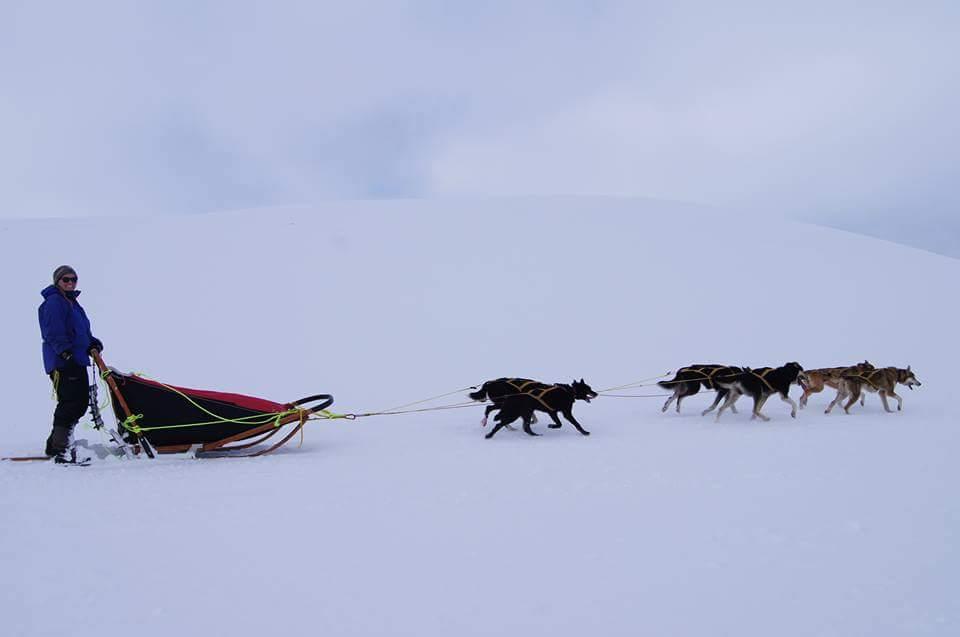HUndeslede, hundespann, på tur